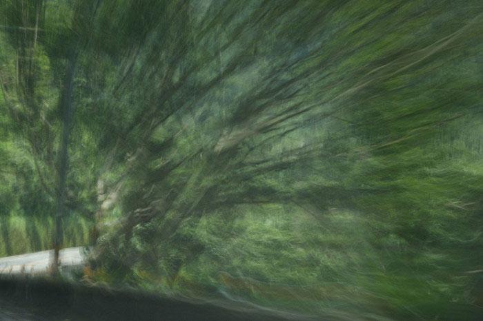 攝影作品:綻放/Bloom/1 Digital photography/8x12吋/2017
